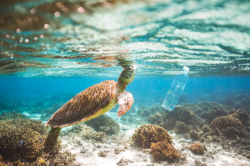 Clear blue aqua marine ocean with turtle and plastic bottle pollution