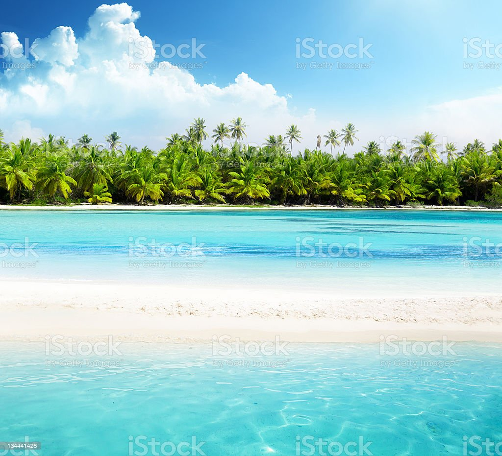 Clear blue sea and beach with palm trees stock photo