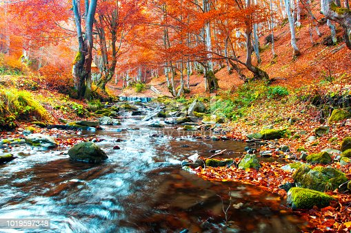 Clear creek in autumn forest. Forest landscape. Trees with red foliage on stream side. Fall nature.