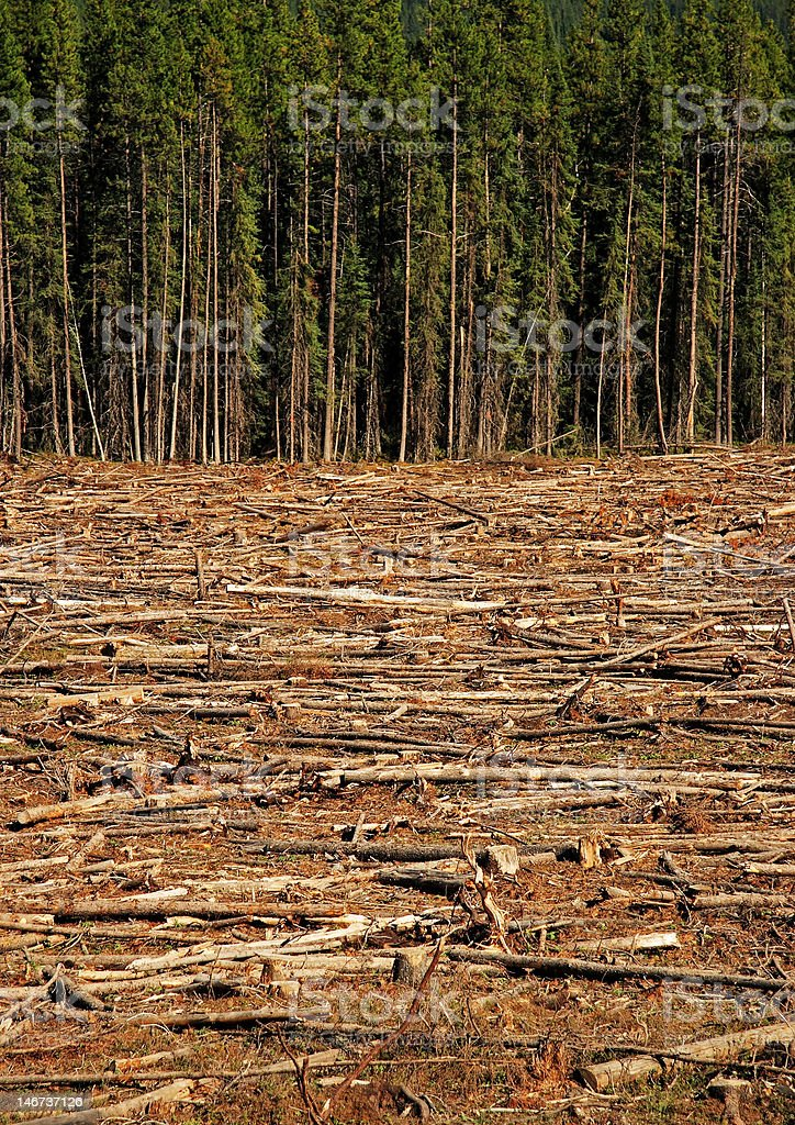 Clear Cut Close Up royalty-free stock photo