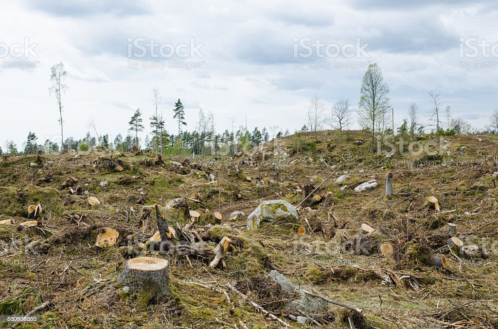 Clear cut forest area stock photo