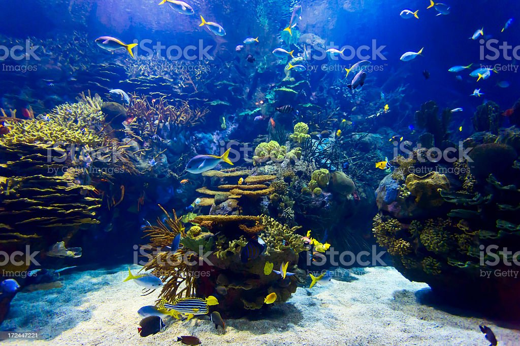 A clear fish tank with many different colored fish stock photo