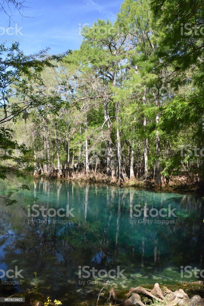 Clara fontes termais aninhado no interior perto de Costa do Golfo da Flórida - Foto de stock de Animal selvagem royalty-free