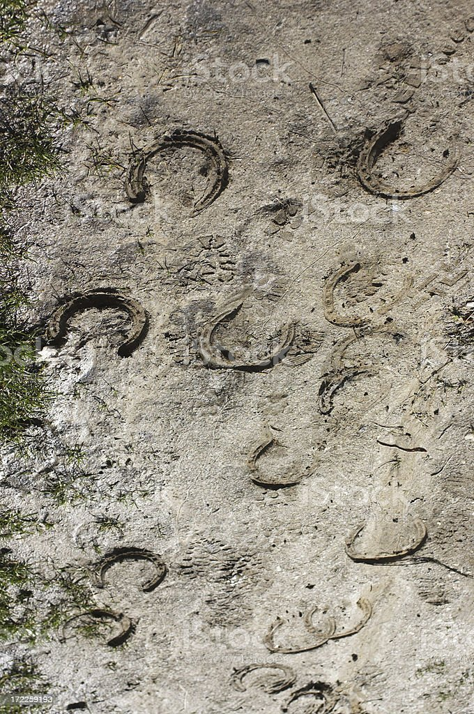 Hoof prints to and fro royalty-free stock photo