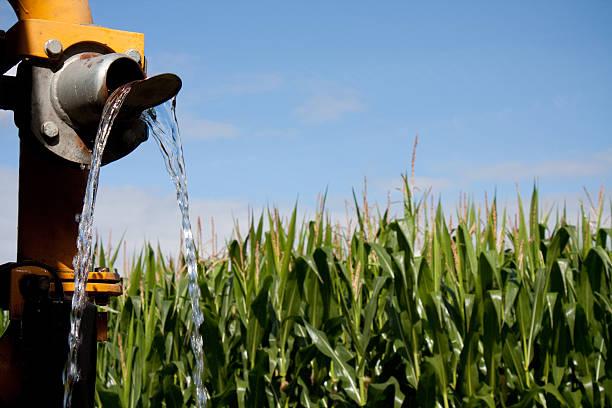 Klares Wasser zur Bewässerung der Gärten des corn field – Foto
