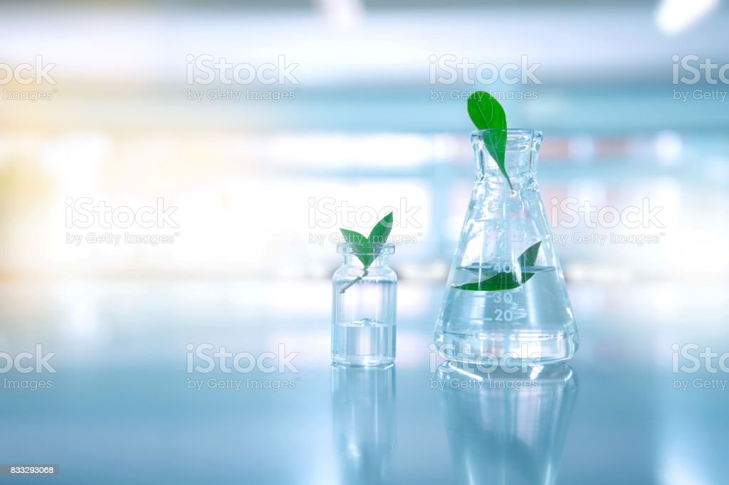 clear water in glass flask and vial with natural green leave in biotechnology science laboratory background stock photo