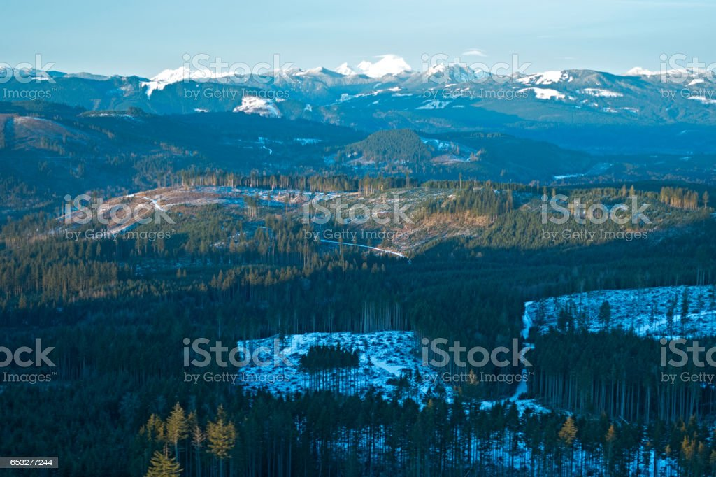 Clearcut Forest Pacific Northwest Mt Baker Foothills stock photo