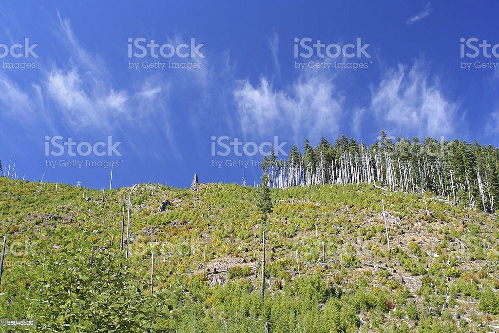 Chiari foresta foto stock royalty-free