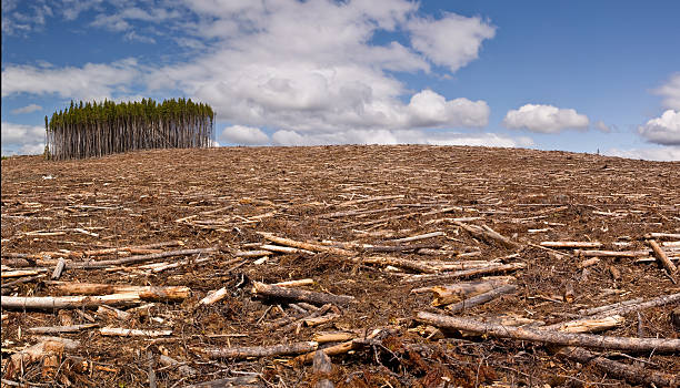 Clearcut logging A pine forest is clearcut save for a small island of trees deforestation stock pictures, royalty-free photos & images