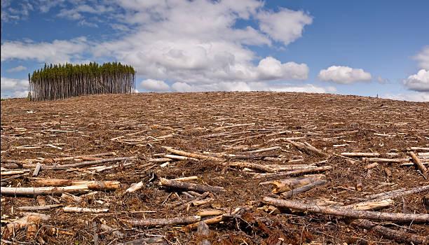 clearcut de sesión - deforestacion fotografías e imágenes de stock
