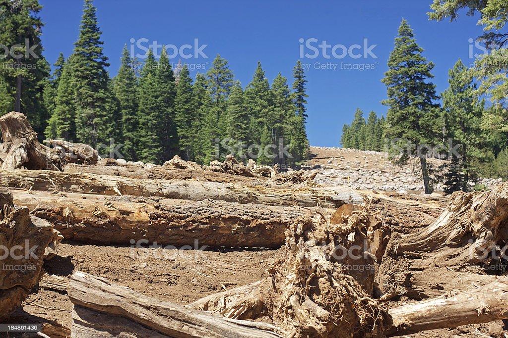 clearcut stock photo