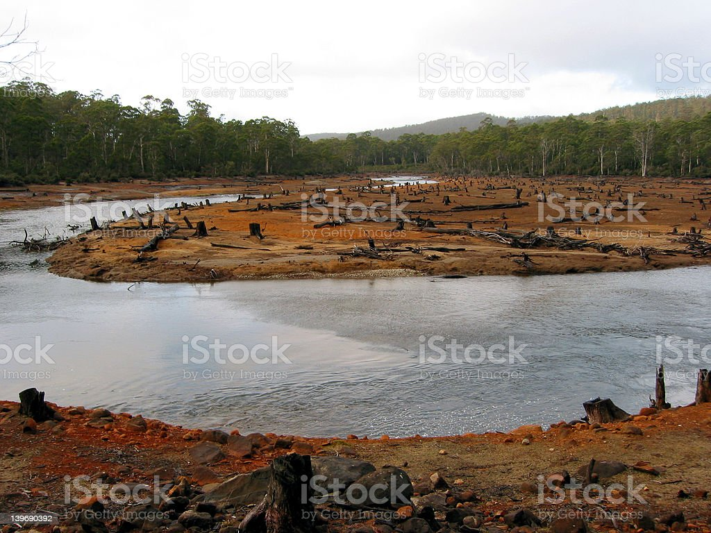 Clearfelled forest scene royalty-free stock photo