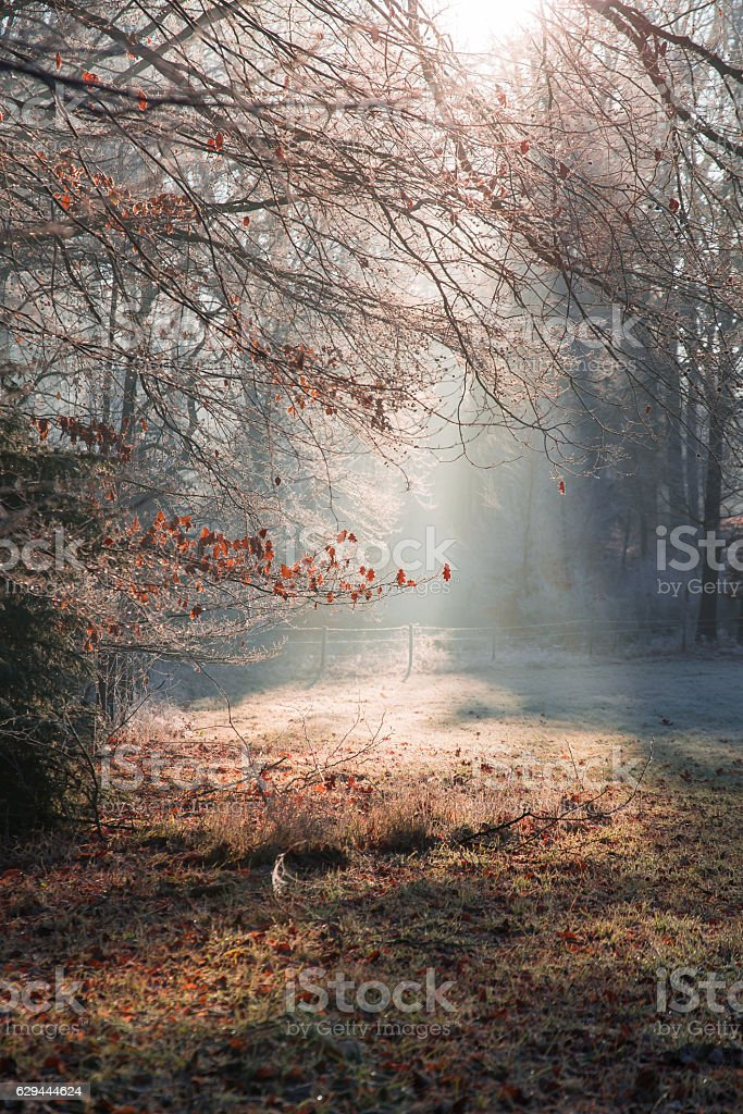 Clearing in the forest covered with frost and sunlight. – Foto