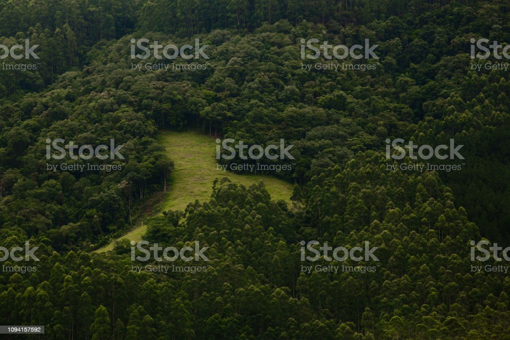 A clearing in the middle of the green woods, with pasture for cattle agribusiness stock photo