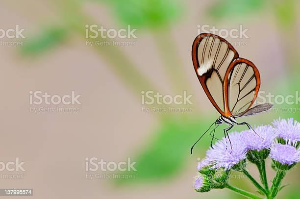 Clearwing butterfly picture id137995574?b=1&k=6&m=137995574&s=612x612&h=akwv1gkavfjwmdfknnb4gnslwpaql86xdiimvtbfvgo=