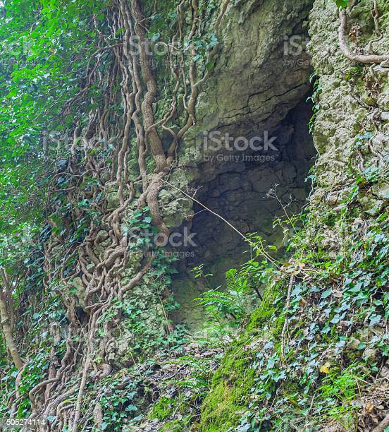 Photo of Cleft in the rock and tree roots.