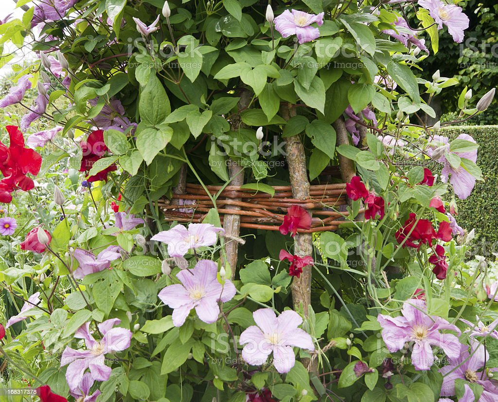 Clematis and Sweetpeas royalty-free stock photo