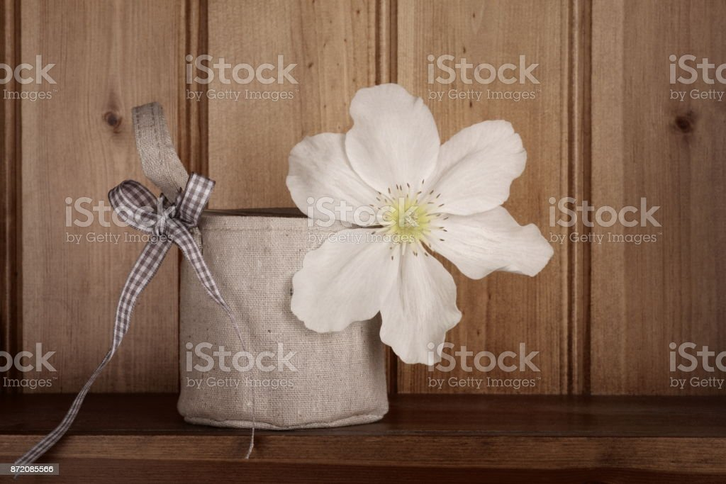 Clematis stock photo