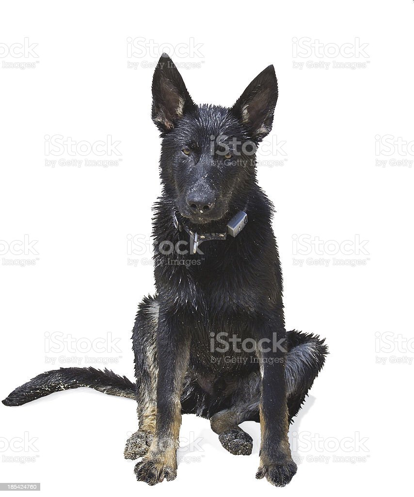 clever dog royalty-free stock photo