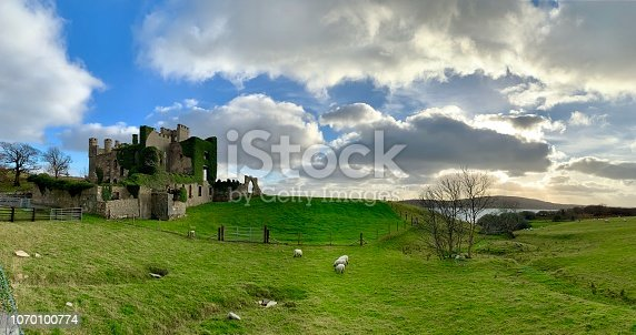 sheep grazing on a field in front of a castle ruin along the Atlantic Ocean