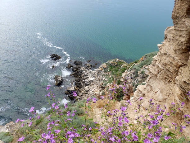 Cliff foot and Black sea Flowers, ladder and rocks above the Black sea in Bulgaria cusp stock pictures, royalty-free photos & images