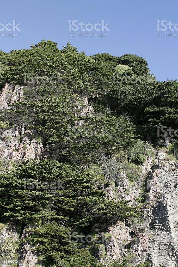 Cliff Trees royaltyfri bildbanksbilder