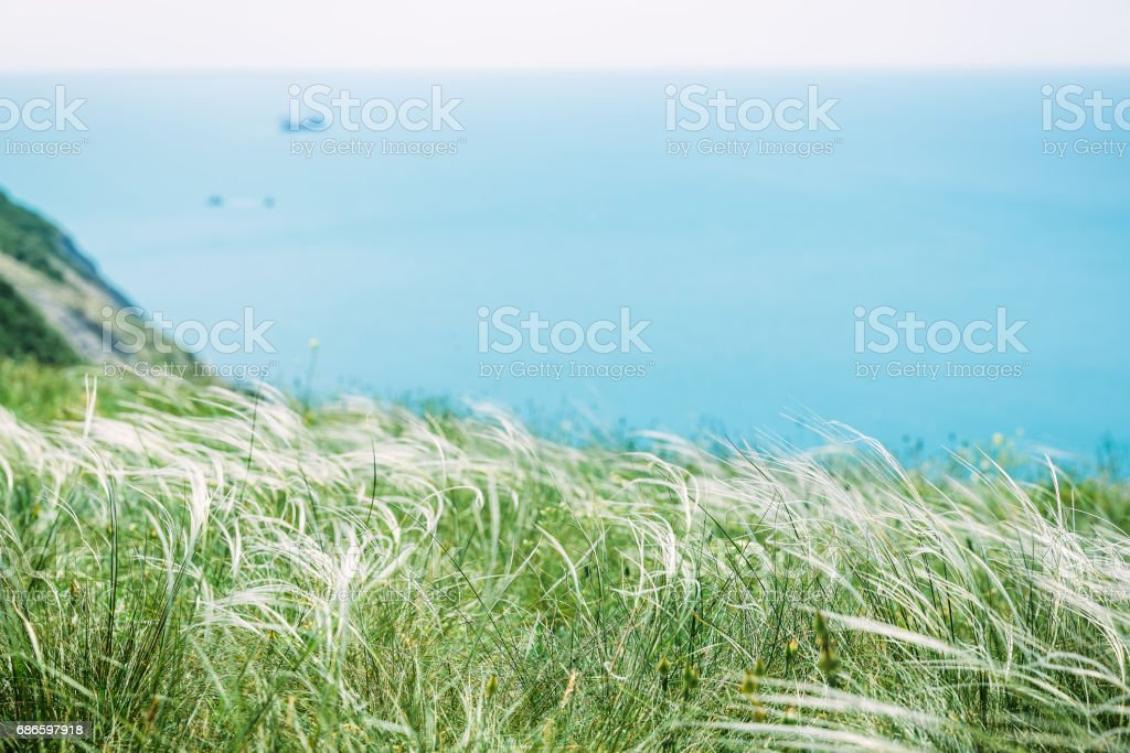 Cliff with frees and blue sea. Beautiful Grass and ocean royalty-free stock photo