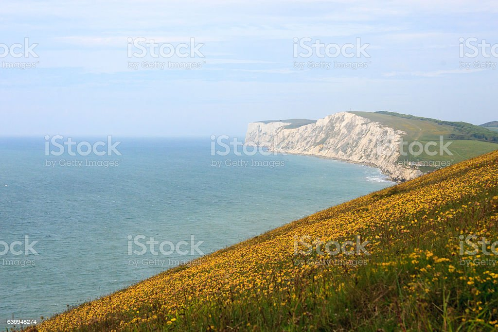 Cliffs and Flowers, Isle of Wight stock photo
