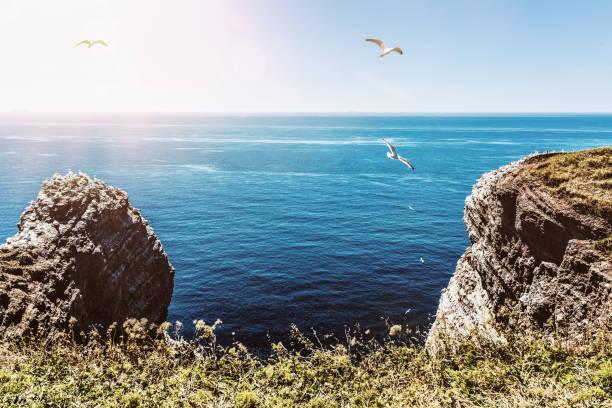 cliffs op het eiland helgoland tegen blauwe zee en hemel - northern gannet stockfoto's en -beelden