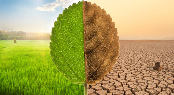 Climate change and Environment concept stock photo
