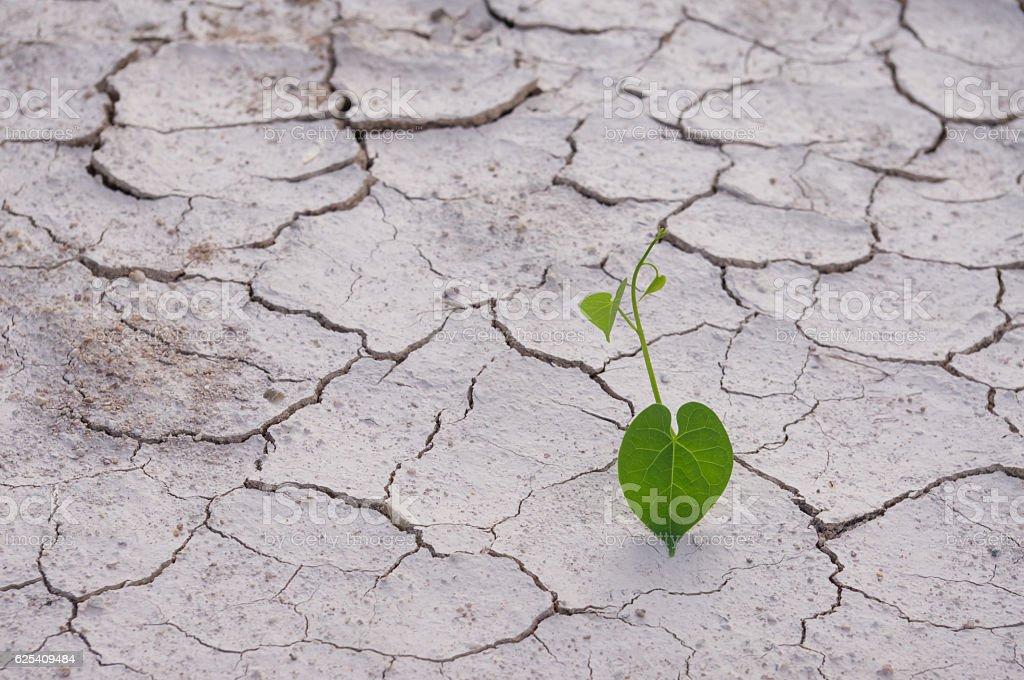 Climate change Heart-shaped leaves on dried land cracked earth stock photo