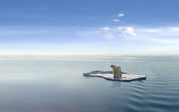 Climate Change Polar bear on an ice floe ice floe stock pictures, royalty-free photos & images