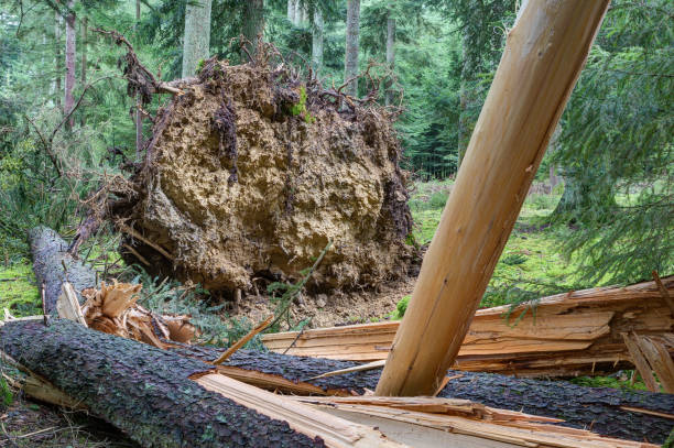 Climate change threatens Europe's forests. stock photo