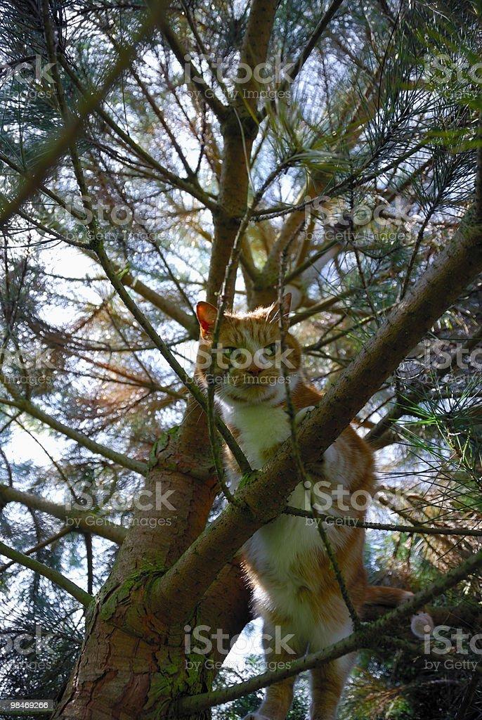 Climbing cat royalty-free stock photo