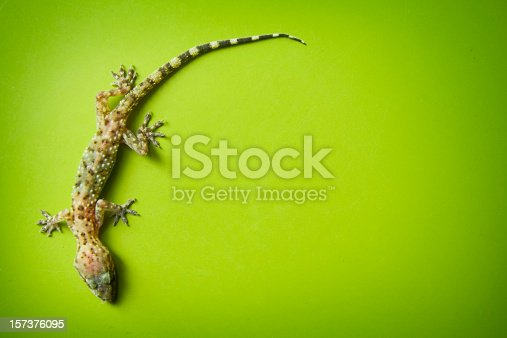 A gecko clinging to the wall with green copy space surrounding.