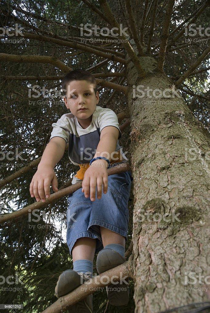 climbing on the tree royalty-free stock photo