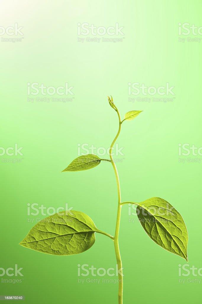 Climbing plant heading towards the light. royalty-free stock photo