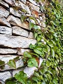 istock Climbing plant on the brick wall 1200703648