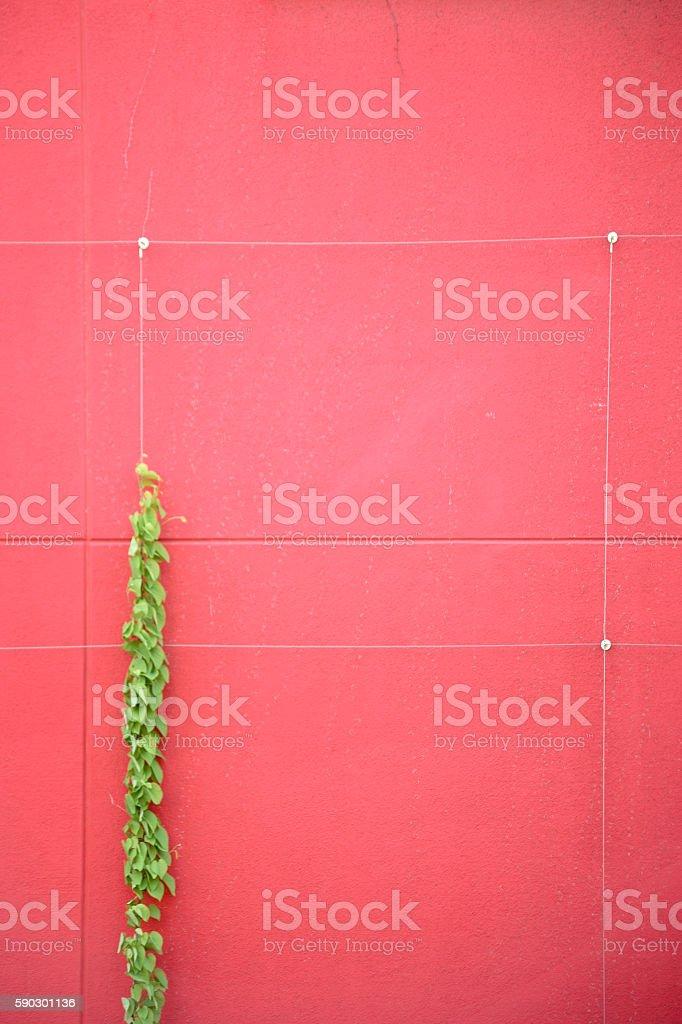 Восхождение Усик растения Стоковые фото Стоковая фотография