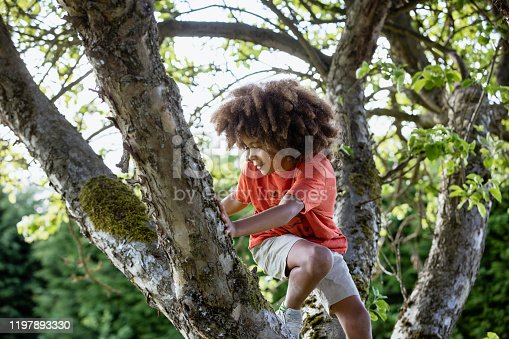 A front-view shot of a young boy with an afro, he is smiling and concentrating while climbing a tree.
