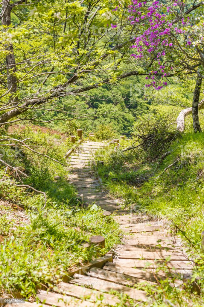 Climbing trail of fresh green stock photo