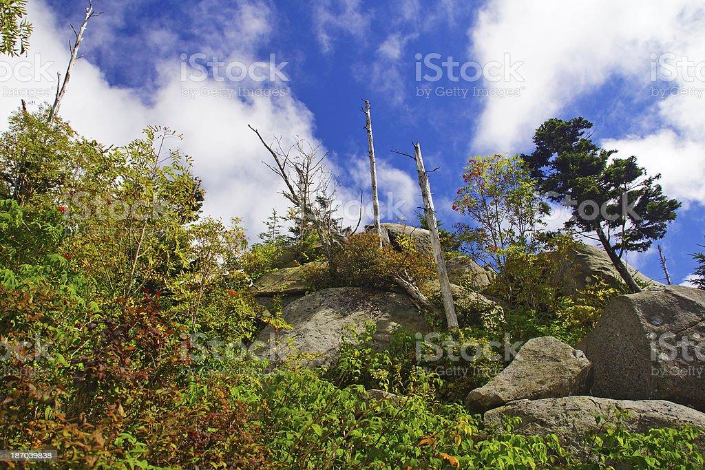 Clingman's Dome Great Smoky Mountain National Park royalty-free stock photo