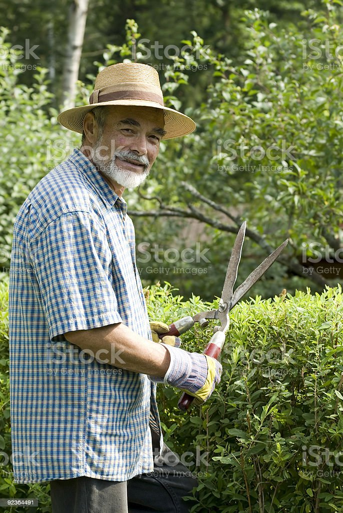 clipping a hedge royalty-free stock photo