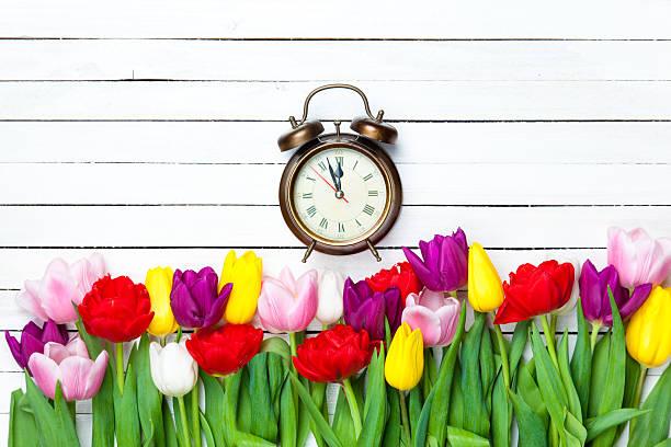 uhr und tulpen - blumenuhr stock-fotos und bilder