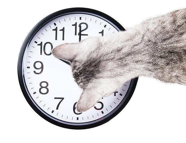 Clock cat picture id523019337?b=1&k=6&m=523019337&s=612x612&w=0&h=ipfest1xab0aa6inr6spmdky17 9as9f8uqydaisjkw=
