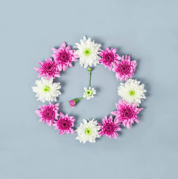 ziffernblatt der chrysantheme gemacht. - blumenuhr stock-fotos und bilder