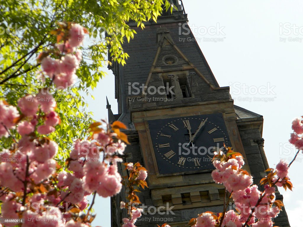 Clock tower framed by pink blossoms stock photo