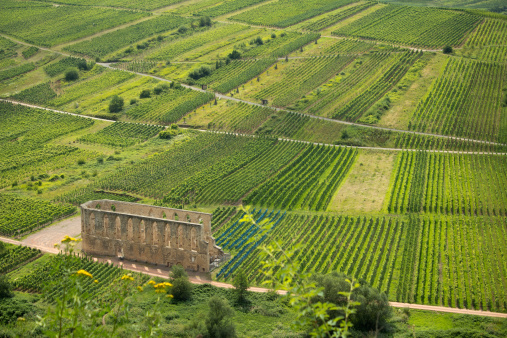 Cloister ruin Stuben in vineyards, Mosel valley, Germany