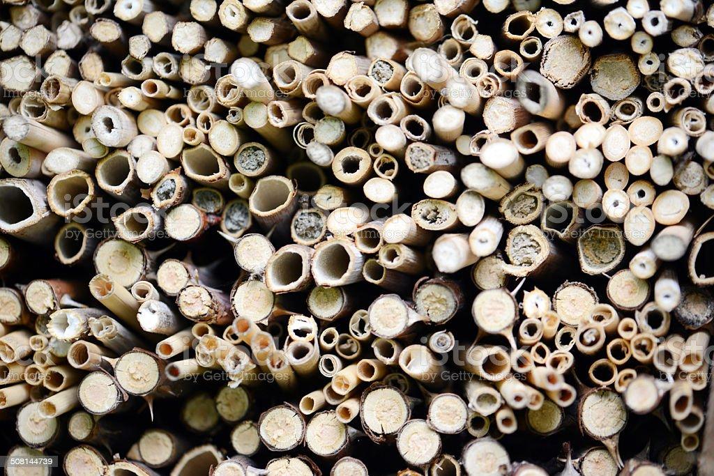 Nid d'abeille à l'abri anti-insectes - Photo
