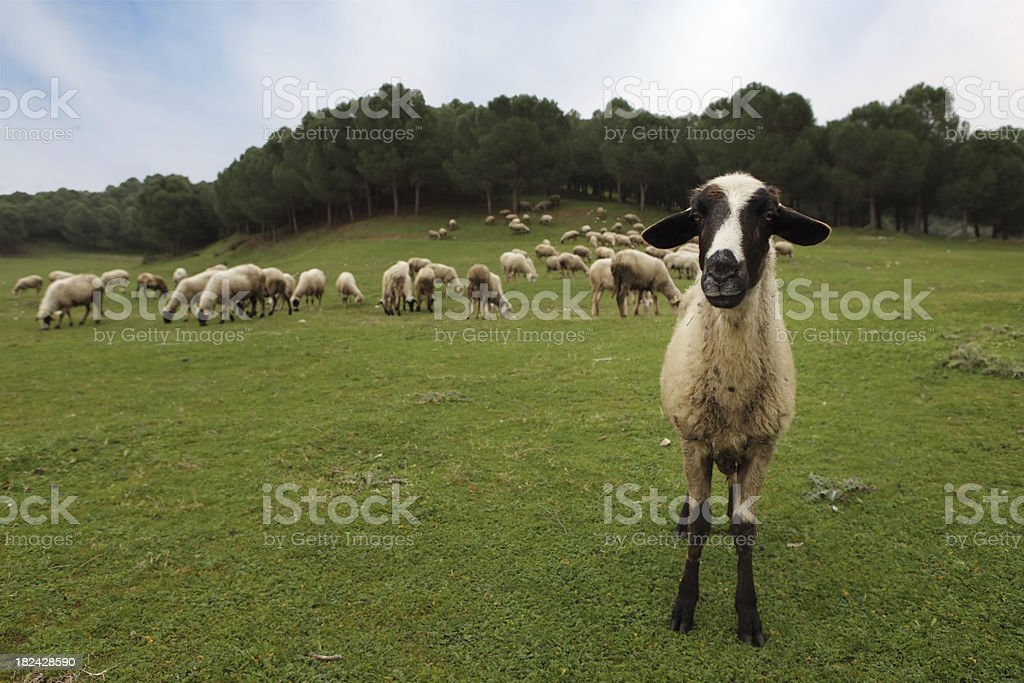 Close Encounter of Another Kind stock photo